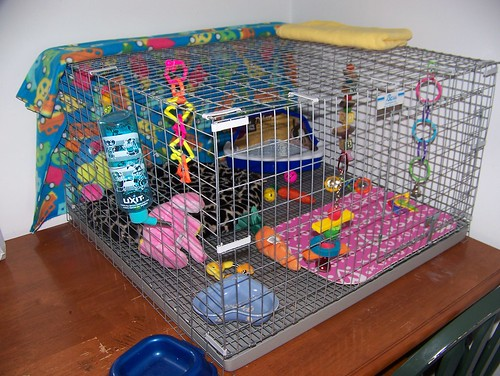 New Bunny Cage