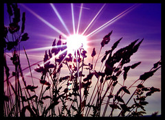 Purple Sunset (Jealously Blue) Tags: blue sunset sun silhouette star purple sheffield hills bole cmwdpurple colourartaward platinumheartaward spiritofphotography llovemypics
