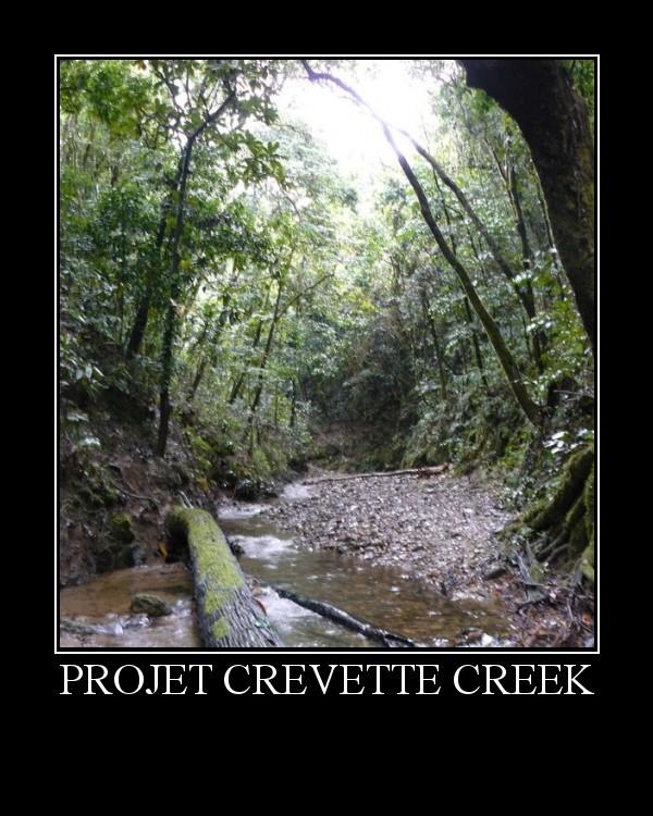 Projet Crevette Creek