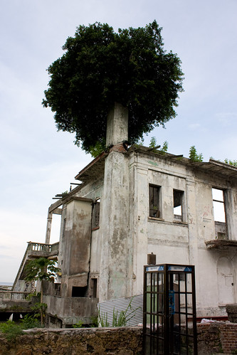 Old Hotel Casco Viego with Ficus growing from chimney
