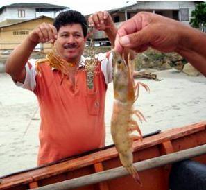 Ecuador-shrimp 4