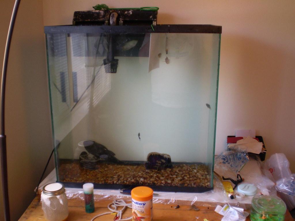 fish tank new