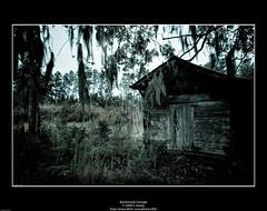 Backwoods Georgia