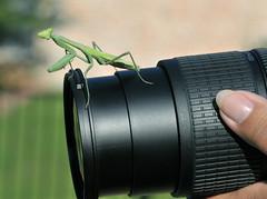 Macro Shot Gone Awry (Jeff Clow) Tags: macro nature animal closeup mantis insect searchthebest explore dfw prayingmantis insecte vie insecta lfe naturesfinest mantereligieuse jeffclow abigfave impressedbeauty jeffrclow