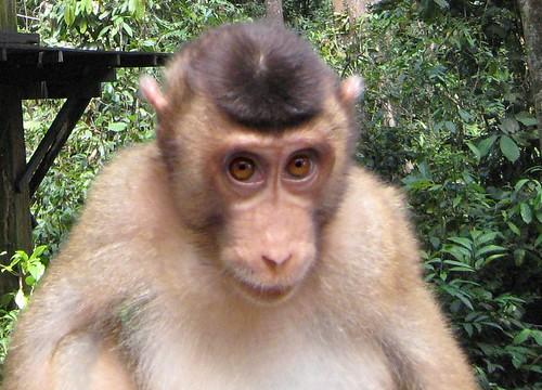 Monkey wants something