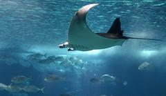 24 - 115c - top (scambigol) Tags: fish lisbon acquarium
