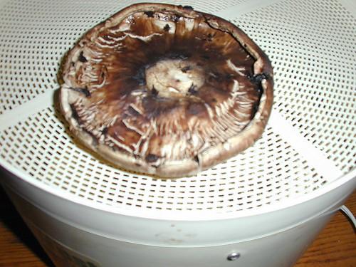De-gilled Mushroom