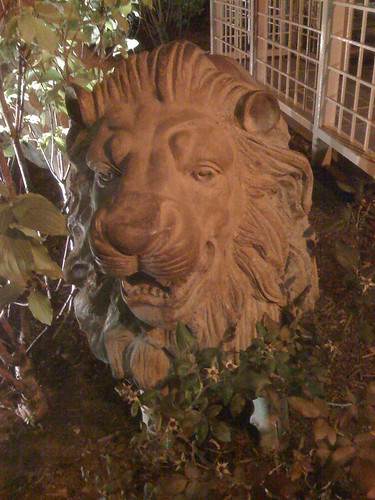 Lion at the Beacon Hotel in Washington DC - Taken With An iPhone