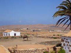 Camel (Becksta1) Tags: sea sun holiday beach islands fuerteventura lanzarote camel canary