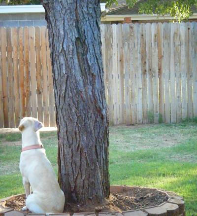 Izzy - Squirrel Hunting