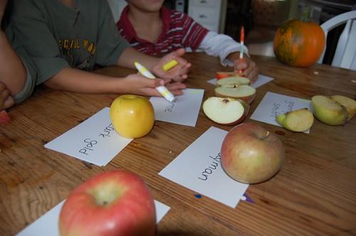 apple tasters ready