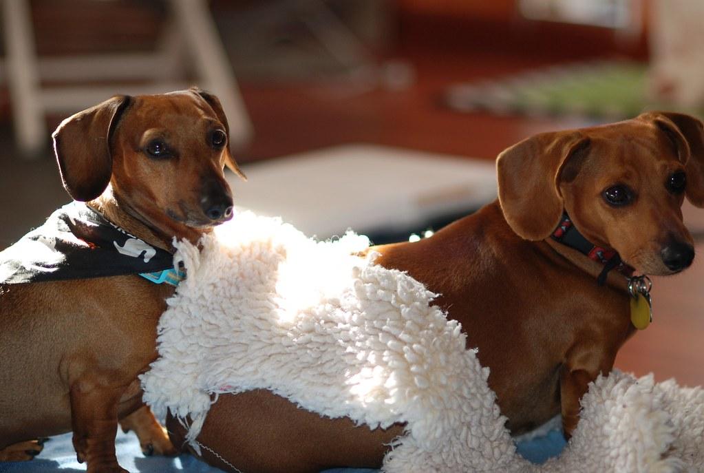 Frieda & Walter