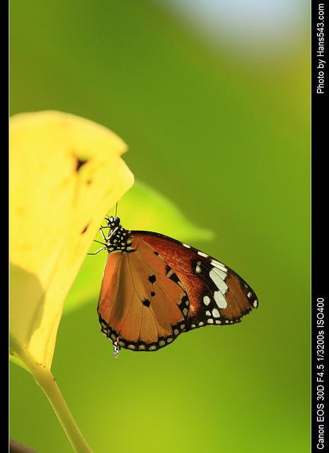 蝴蝶_Butterfly_05