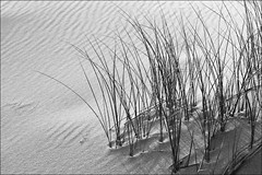 a moment in the dunes (Sabinche) Tags: bw nature grass germany blackwhite interestingness dunes sylt sabinche interestingness136 northfrisia a710is impressedbeauty