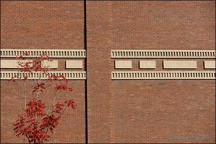 Fall_Wall.jpg