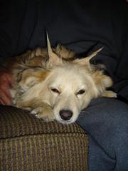 Trixie 10-08