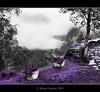 HDR - Violet Dream (*atrium09) Tags: norway landscape violet noruega hdr atrium09 aplusphoto rubenseabra
