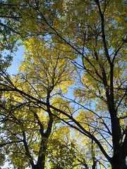 Change Of Seasons, Minneapolis, Minnesota, October 2008, photo © 2008 by QuoinMonkey. All rights reserved.