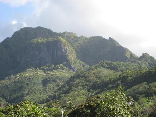 Cook Islands Jungle