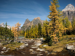 Explore Opabin Plateau (Marc Shandro) Tags: blue sky mountains tree water stream bc rocky sunny clear alpine larch yoho lakeohara getty2