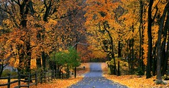 Pennsylvania Fall Foliage (MBH Pa) Tags: autumn trees fall digital canon scenery pennsylvania vivid fallfoliage canonrebel fabulous 1001nights picturesque soe lehighvalley nationalgeographic blueribbonwinner bestlandscape topshots flickrsbest northamptoncounty xti pennsylvaniascenery mywinners mywinner abigfave canonrebelxti worldbest bestnature pennsylvaniafallfoliage anawesomeshot colorphotoaward aplusphoto ultimateshot bestlandscapes thelehighvalley diamondclassphotographer citrit perfectscenery thatsclassy platinumheartaward betterthangood proudshopper theperfectphotographer goldstaraward pennsylvanialandscape spiritofphotography spiritofphotograpy panoramafotogrfico steubenpennsylvaia pennsylvanialandscapes thebestscenery