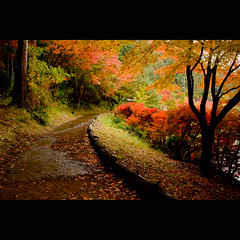 Autumn Path (TheJbot) Tags: autumn lake fall leaves japan forest woods  jbot lightroom nothdr thejbot vosplusbellesphotos