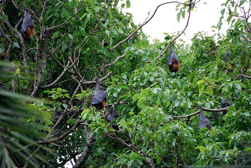 Murciélagos sobre los árboles