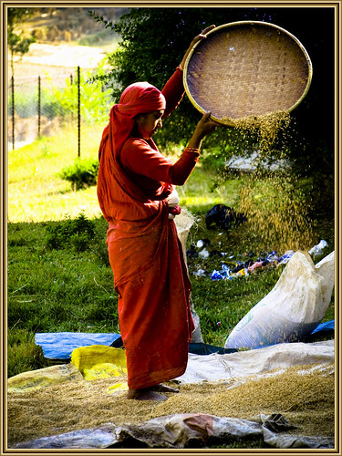 cleaning wheat