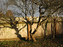 Shed some light... (Librarianguish) Tags: trees light shadow cold tree home fence backyard shadows windy stark barren lilacs 1108 goodlight msh1109 msh110913 shedlight