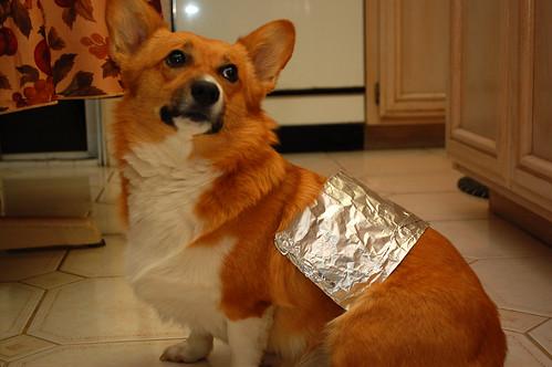 Cyber Dog