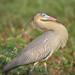 Série com a Maria-faceira (Syrigma sibilatrix) - Series with the Whistling Heron - 01-12-2008 - IMG_20081201_9999_752