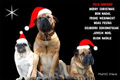 Feliz Navidad a todos los Flikeros del mundo ! ! ! (Maril Irimia) Tags: christmas bon de navidad noel postal merry natale festas nada boas joyeux feliznavidad buon felicitacin navidea eguberri zorionstsuak mygearandme