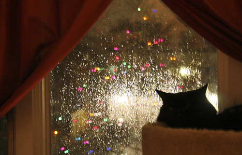 Relaxing during a rainy Christmas season -- cat kitten rain pet kitty chat animal gato feline water drops droplets