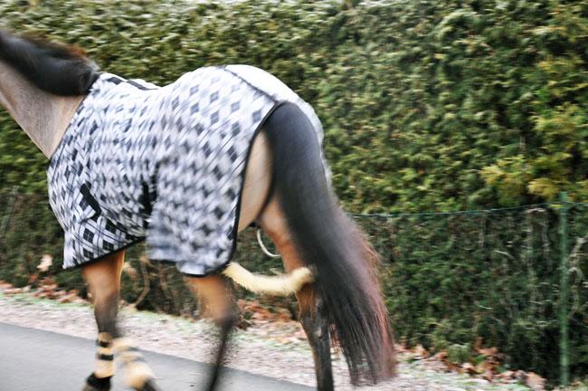 Häst på promenad