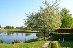 Dorfteich Hohen Demzin (ThomasKohler) Tags: lake germany deutschland schweiz see mecklenburg seenplatte hohen mecklenburger mecklenburgische demzin