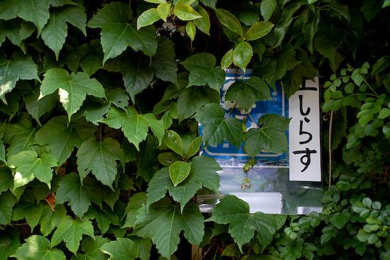 20110604-DSC_2964shirasu