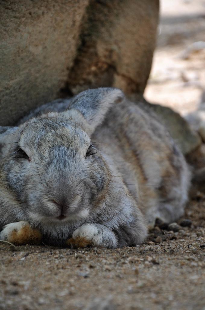 Rabbit Farm 养兔场 ...