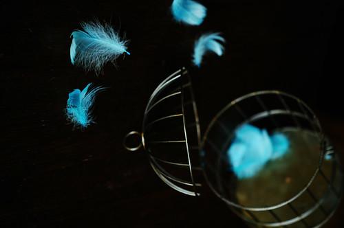 L'Oiseau bleu_Bird cage_13 by ajari