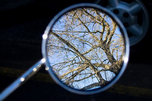 Reflecting On Nature - trees reflected in a scooter's rear view mirror