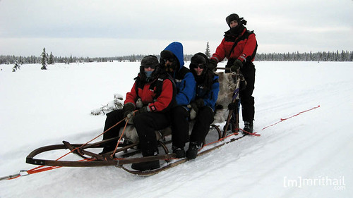 Kiruna - Dogsled