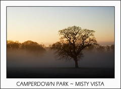 Camperdown Park ~ Misty Vista (Magdalen Green Photography) Tags: mist tree misty scotland cool dundee scottish tayside haar camperdownpark mistyvista picturesofdundee dundeephotography imagesofdundee dundeestockphotography printsofdundee
