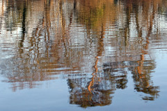 New Forest Reflection