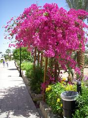 Tree - Sharm el Sheik