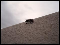 descanso (SiuL (lggf)) Tags: abeja descanso momentos parar respiro lujandecuyo pedriel