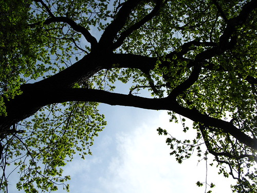 dark trunk, blue sky, green leaves