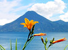 Lake Atitlan with Lilies and a Volcano