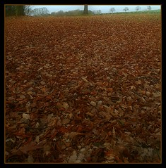 winter leafs (Darren Speak) Tags: uk winter brown canon yorkshire january wakefield leafs newmillerdam ridings eos400 excapture