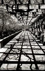 A bit of perspective (CVerwaal) Tags: nyc newyorkcity blackandwhite newyork analog fuji shadows centralpark perspective ishootfilm oldschool fujisuperia olympus35rc artlegacy