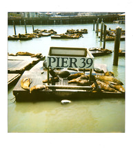 Pier 39 Seals (ryan-c.com) Tags: ocean california ca party usa water sign america polaroid bay pier dock san francisco pacific seal 600 seals p states 39 poli roid uniter