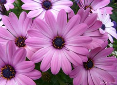 Happy Monday  (Dave :-) (on and off)) Tags: pink flowers flower macro nature closeup dave blumen lovely makro aplusphoto diamondclassphotographer flickrdiamond theunforgettablepictures platinumheartaward theperfectphotographer